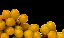 GFV Raisins détourés pour Foncière ou groupement viticoles